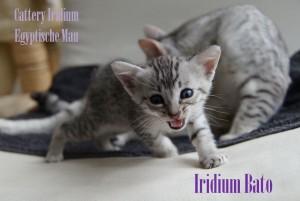 Iridium Bato