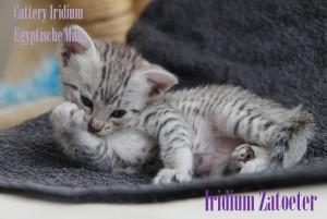 Iridium Zatoeter2