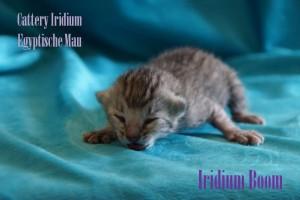 Iridium Boom
