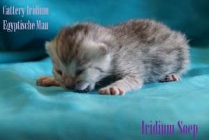 Iridium Soep