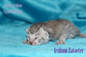 Iridium Zatoeter