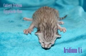 iridium ui