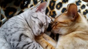 Samen met Toeter lekker slapen thuis
